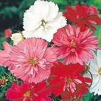 種 花たね コスモス 八重咲コスモス混合 1袋(500mg)