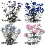 花たね デルフィニウムセット 4種4袋