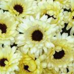種 花たね キンセンカ スノープリンセス 1袋(20粒) / 花種 花の種 はなたね 切花向き 金盞花 ポットマリーゴールド カレンジュラ カレンデュラ 仏花向き