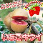 果樹苗 キウイ 紅珊瑚&早雄セット 2種2株