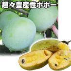 果樹苗 ポポー KSU-ベンソンTM 3株