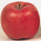 果樹苗 リンゴ こうとくJM7P台 1株