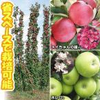 果樹苗 ミニリンゴ 紅白バレリーナツリーセット 2種2株