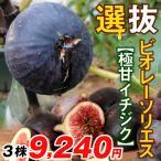 果樹苗 イチジク 選抜ビオレーソリエス 3株