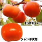 果樹苗 カキ 大玉甘柿セット 2種2株