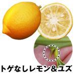 果樹苗 カンキツ トゲなしレモン&ユズ 2種2株
