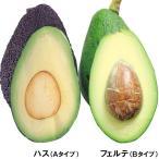 果樹苗 アボカド 定番アボカドセット 2種2株