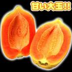 果樹苗 パパイヤ ウルトラ種なしフルーツパパイヤ 2株