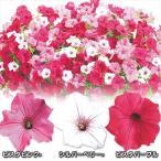 花苗 ペチュニア スーパーチュニアRビスタセット 3種3株 / 花の苗 はな苗 花壇