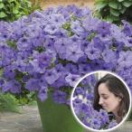 花苗 ペチュニア ブルームーン 3株 / 花の苗 はな苗 花壇