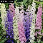 花苗 デルフィニウムミックス (花色無選別) 5株 / 花の苗 はな苗 花壇