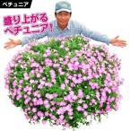 花苗 ペチュニア マドンナの宝石 ピンク 2株 / はななえ 花の苗