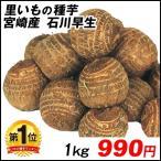 種いも 里いも 宮崎産 石川早生 1kg / さといも サトイモ たね芋 たねいも