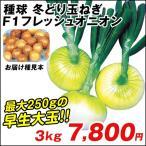 玉ねぎ苗 冬どり玉ねぎ F1フレッシュオニオン 3kg / タマネギ たまねぎ 苗