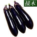 接木野菜苗 ナス 接木F1黒稲妻 4株 / ナスの苗 なすの苗 茄子の苗 なすびの苗 国華園