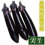 実生野菜苗 ナス F1黒仙 12株 / ナスの苗 なすの苗 茄子の苗 なすびの苗 国華園