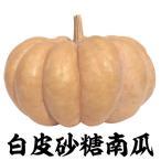 野菜たね カボチャ 白皮砂糖南瓜 1袋(10ml) / タネ 種