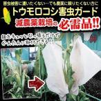 野菜たね トウモロコシ トウモロコシ害虫ガード 1袋(10枚) / 種 タネ