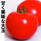 野菜たね 種 トマト F1 完熟まる味 1袋(0.5ml) / 野菜の種 大玉 国華園 ytsc86