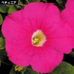 花たね ペチュニア ピンク 1袋(20粒) / タネ 種