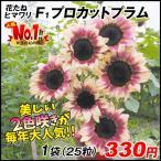 花たね ヒマワリ F1プロカットプラム 1袋(25粒) / 種 タネ