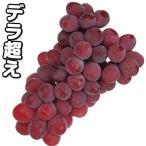 果樹苗 ブドウ サニールージュP 3株 / 果物苗 フルーツ苗 葡萄 ぶどう