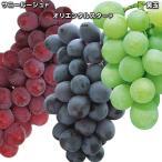 果樹苗 ブドウ 誰でもかんたんブドウセット 3種3株 / 果物苗 フルーツ苗 葡萄 ぶどう