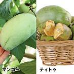 果樹苗 ポポー 美味ポポーセット 2種2株 / 果物苗 フルーツ苗