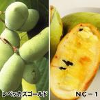 果樹苗 ポポー 激安巨大ポポーセット 2種2株 / 果物苗 フルーツ苗