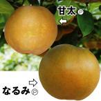 果樹苗 ナシ おすすめナシセット 2種2株 / 果物苗 フルーツ苗 梨 なし