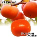 果樹苗 カキ 定番の大玉甘柿セット 2種2株 / 果物苗 フルーツ苗
