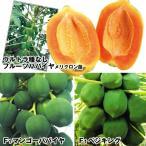 果樹苗 パパイヤ 優秀パパイヤセット 3種3株 / 果物 フルーツ苗