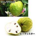 果樹苗 チェリモヤ 森のアイスクリームセット 2種2株 / 果物 フルーツ苗