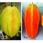 果樹苗 スターフルーツセット 2種2株 / 果物 フルーツ苗