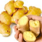 種しょうが 大特価 黄金ショウガ 1kg / 生姜 しょうが たね芋