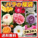 バラ苗福袋(大輪・中輪品種見計らい・名称付) 3株
