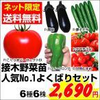 【送料無料】 接木野菜苗 人気No.1よくばりセット 6種6株(各1株)