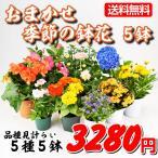 送料無料 鉢花 おまかせ季節の鉢花 5鉢