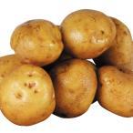 じゃがいも種芋 キタアカリ 10kg