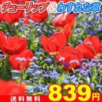 送料無料 チューリップ&わすれな草セット 2種1組 / チューリップ赤 30球、わすれな草ブルー 300mg