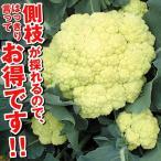 種 野菜たね カリフラワー F1サムライム 1袋(1ml)側枝も収穫