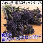種 野菜たね 茎ブロッコリー F1スティックパープル 1袋(0.5ml)