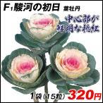 種 花たね 葉牡丹 F1駿河の初日 1袋(20粒)/タネ たね
