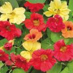 花たね 金蓮花 ハワイアンミックス 1袋(3000mg) / タネ 種