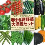 送料無料 野菜たね 春まきオススメ野菜大満足セット 10種10袋