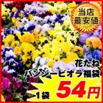 [ネット限定販売]種 花たね パンジービオラ福袋 1袋(60mg)