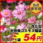 [ネット限定販売]種 花たね 大特価コスモス福袋 1袋(500mg)