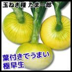 野菜たね 種 タマネギ たま一郎 1袋(3ml) / 玉葱 玉葱の種 タマネギの種 玉ねぎの種 種子 超極早生 野菜の種 国華園