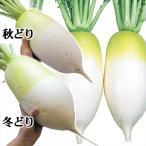 種 野菜たね ダイコン F1まる太り大根 1袋(5ml) / タネ たね 大根 だいこん 大根 大根の種 ダイコンの種 【YTC05】
