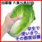 種 野菜たね ハクサイ F1食べきり50 1袋(4ml) / 白菜 野菜の種 国華園